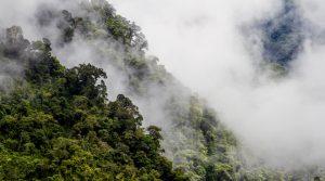Parque Nacional Natural Selva de Florencia