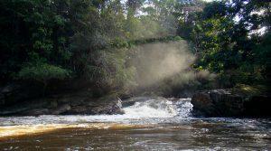 Parque Nacional Natural Río Puré