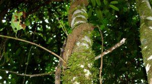 Santuario de fauna y flora Plantas Medicinales Orito Ingi-Andé