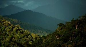 Parque Nacional Natural Alto Fragua Indi Wasi