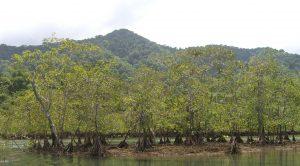 Parque Nacional Natural La Paya