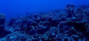 Parque Nacional Natural Corales de Profundidad