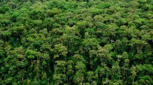 Parque Nacional Natural Serranía de Los Yariguíes