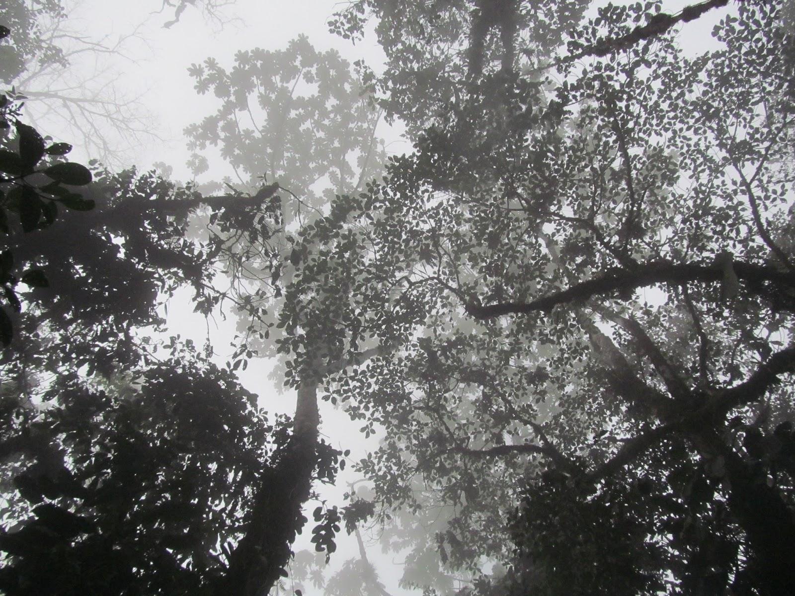 Bosques de niebla en Cali