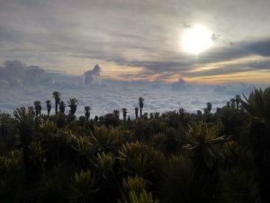 Páramo del Sol. Foto: co.pinterest.com