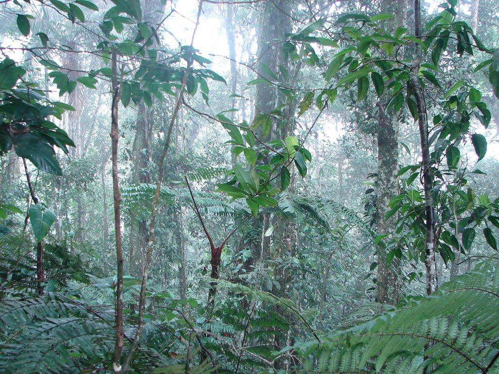 Natural Bosque de Yotoco: Foto: mapio.net/
