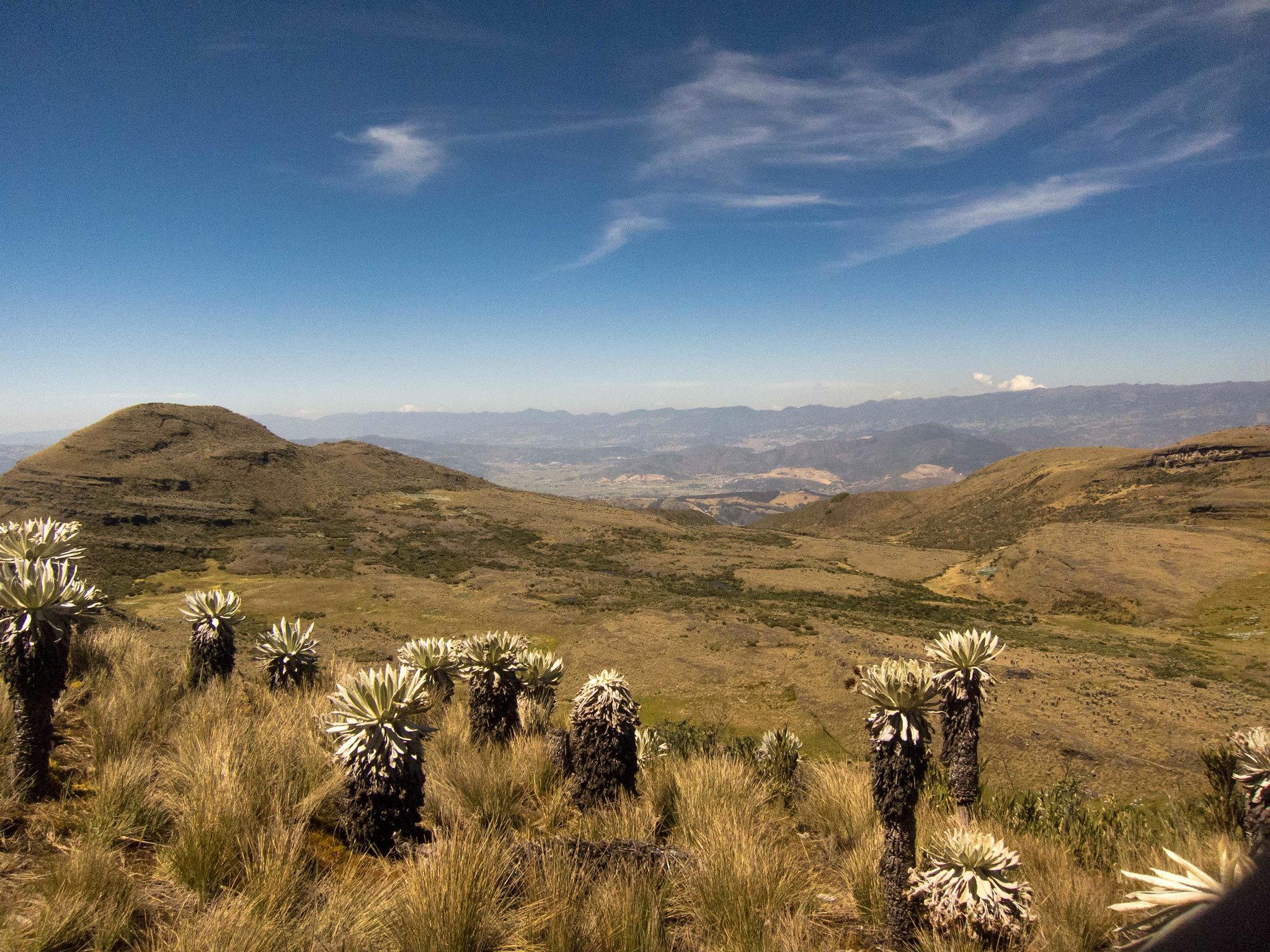 Páramo de Ocetá. Foto: Oscar Santiago Piñeros- flickr