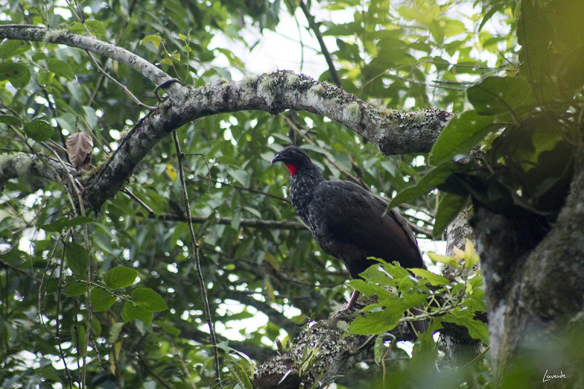 Natural Bosque de Yotoco