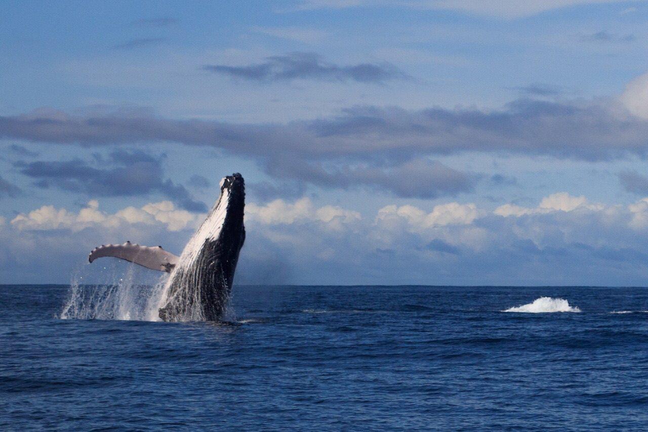 Ballenas en Chocó