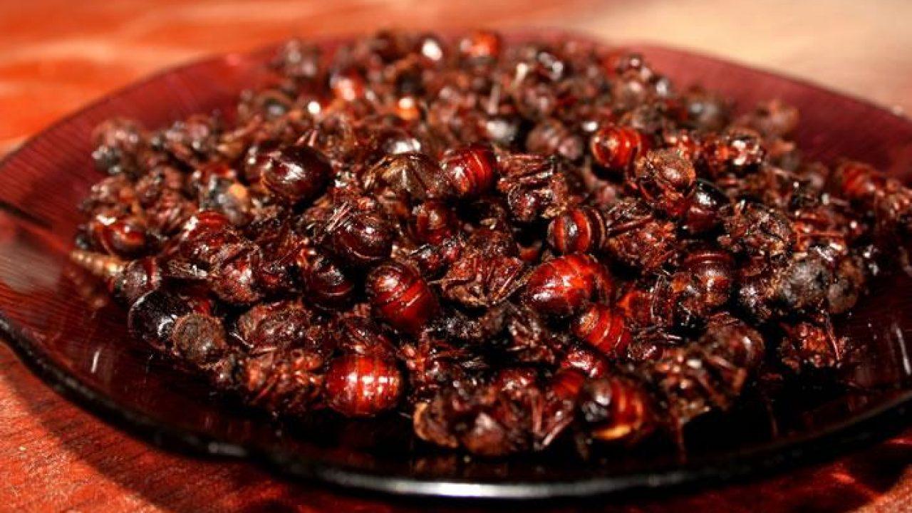 Hormigas culonas: ¿cómo se preparan? - Viajar por Colombia