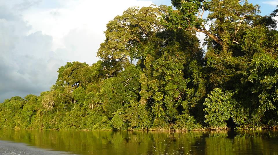 Parque Nacional Natural Cahuinarí