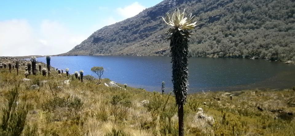 Santuario de flora y fauna Guanentá Alto Río Fonce