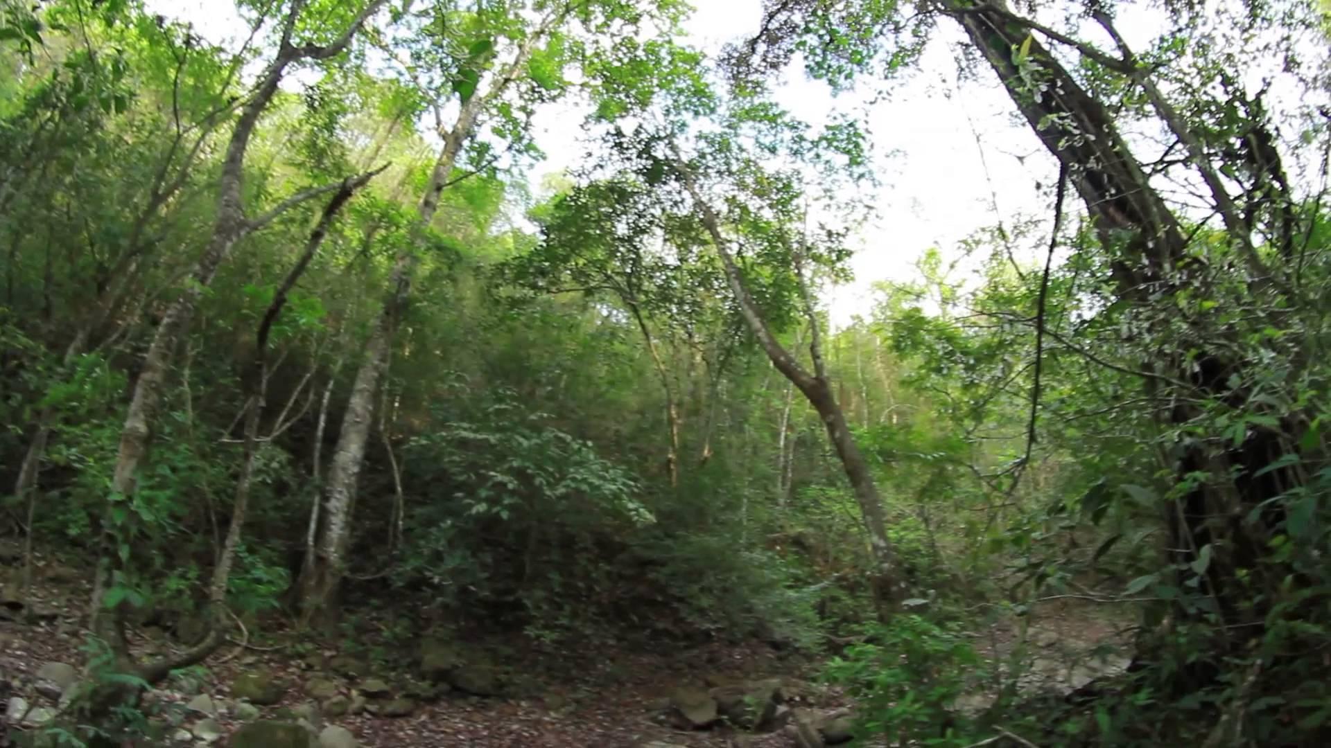 Santuario de Flora y Fauna Los Colorados