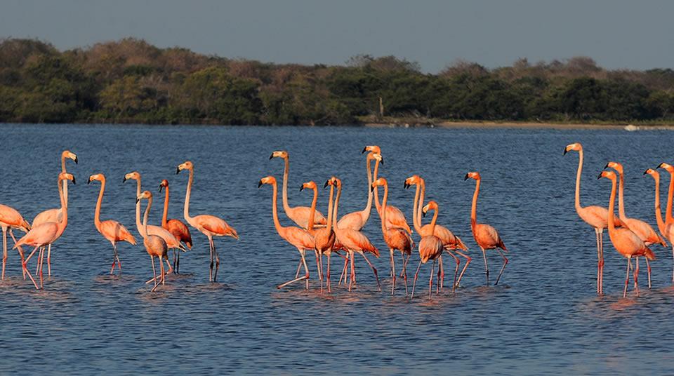 Santuario de Fauna y Flora Los Flamencos