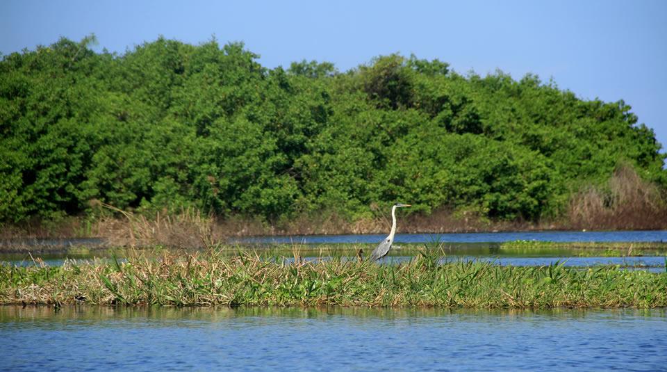 Santuario de Flora y Fauna Ciénaga Grande de Santa Marta